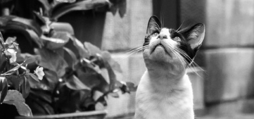 yen_cat